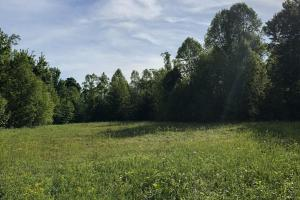 83 Acres with finishable Hunting Retreat in Madison, KY (30 of 33)
