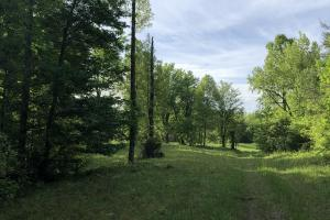 83 Acres with finishable Hunting Retreat in Madison, KY (23 of 33)