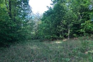 83 Acres with finishable Hunting Retreat in Madison, KY (21 of 33)