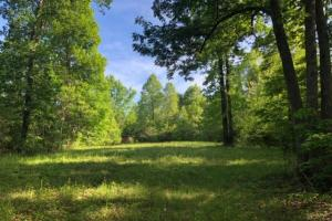 83 Acres with finishable Hunting Retreat in Madison, KY (20 of 33)