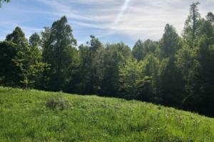 83 Acres with finishable Hunting Retreat in Madison, KY (6 of 33)