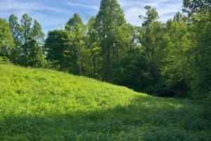 83 Acres with finishable Hunting Retreat in Madison, KY (17 of 33)