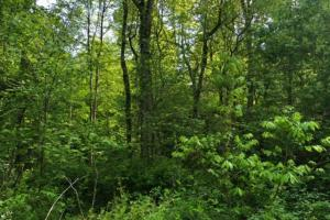 83 Acres with finishable Hunting Retreat in Madison, KY (15 of 33)