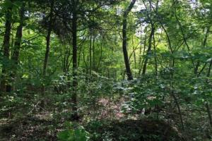 83 Acres with finishable Hunting Retreat in Madison, KY (19 of 33)