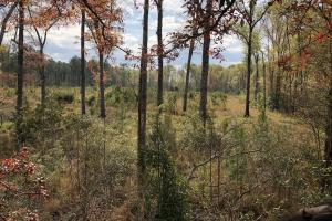 Pineland Hunting / Homesite / Timber Firetower Rd. - Jasper County SC