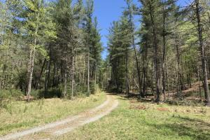 Wilkes County Hunting and Timber Tract - Wilkes County NC