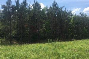 Ohatchee Timber & Hunting Tract in Calhoun, AL (32 of 39)