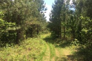 Ohatchee Timber & Hunting Tract in Calhoun, AL (27 of 39)