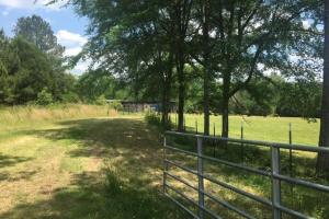 Ohatchee Timber & Hunting Tract in Calhoun, AL (38 of 39)