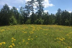 Ohatchee Timber & Hunting Tract in Calhoun, AL (22 of 39)