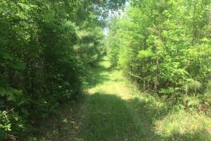 Ohatchee Timber & Hunting Tract in Calhoun, AL (26 of 39)