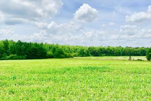 Lake Jackson Agriculture Land, Timber Investment, and Hunting - Walton County FL