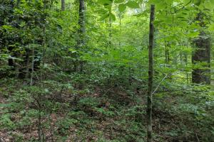Peppers Creek Property with Views in McDowell, NC (7 of 21)