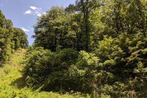 Peppers Creek Property with Views in McDowell, NC (4 of 21)