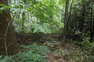 Peppers Creek Property with Views in McDowell, NC (10 of 21)