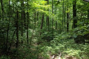 Peppers Creek Property with Views in McDowell, NC (9 of 21)