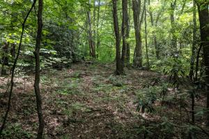 Peppers Creek Property with Views in McDowell, NC (11 of 21)
