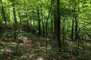 Peppers Creek Property with Views in McDowell, NC (18 of 21)