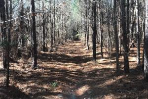 A few access roads are present in some areas of the tract. (3 of 6)