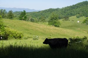 Farm with Rolling Pastures, Woodlands and Streams near Asheville - Buncombe County NC