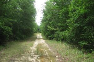 Interior road along AT&T fiber optic cable line. (22 of 26)