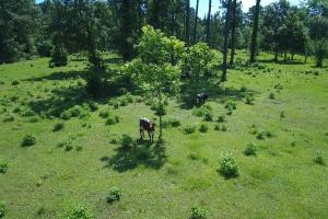 Sportsman's Paradise/ Recreational tract and Homesite in Liberty, TX (25 of 29)