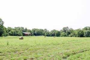 513 acre Cattle Farm on the Green River in Casey, KY (22 of 24)