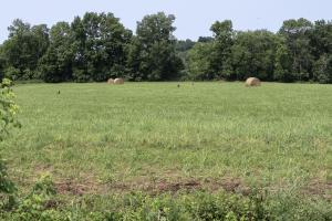 513 acre Cattle Farm on the Green River - Casey County KY