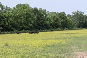 513 acre Cattle Farm on the Green River in Casey, KY (21 of 24)
