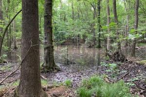 Fishing Creek Hunting Tract in Nash, NC (16 of 33)