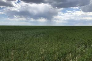Kiowa County Dry Land For Sale in Kiowa, CO (3 of 3)