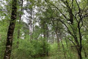 Loring Road Timber and Hunting Investment  in Madison, MS (22 of 29)