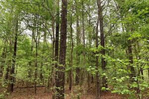 Loring Road Timber and Hunting Investment  in Madison, MS (17 of 29)