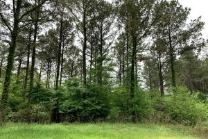 Loring Road Timber and Hunting Investment  in Madison, MS (12 of 29)