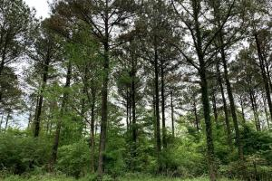 Loring Road Timber and Hunting Investment  in Madison, MS (3 of 29)