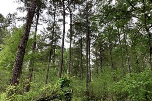 Loring Road Timber and Hunting Investment  in Madison, MS (5 of 29)