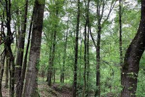 Loring Road Timber and Hunting Investment  in Madison, MS (9 of 29)