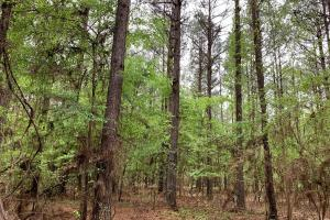 Loring Road Timber and Hunting Investment  in Madison, MS (10 of 29)