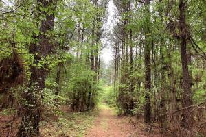 Loring Road Timber and Hunting Investment  in Madison, MS (2 of 29)