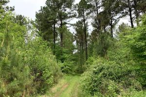 Loring Road Timber and Hunting Investment  in Madison, MS (8 of 29)