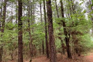 Loring Road Timber and Hunting Investment  in Madison, MS (14 of 29)
