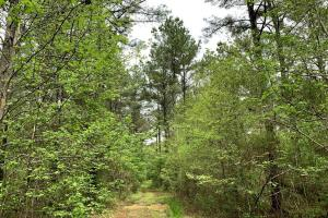 Loring Road Timber and Hunting Investment  in Madison, MS (7 of 29)