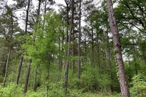 Loring Road Timber and Hunting Investment  in Madison, MS (4 of 29)