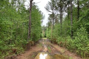 Loring Road Timber and Hunting Investment  in Madison, MS (18 of 29)