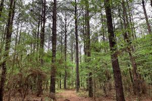 Loring Road Timber and Hunting Investment  in Madison, MS (1 of 29)