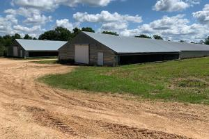 Chicken Farm Near Wesson Mississippi - Copiah County MS