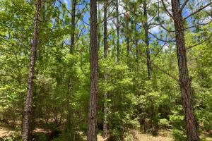 Longleaf Hunting Retreat in Escambia, AL (15 of 17)