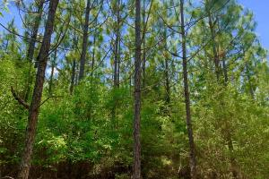 Longleaf Hunting Retreat in Escambia, AL (7 of 17)