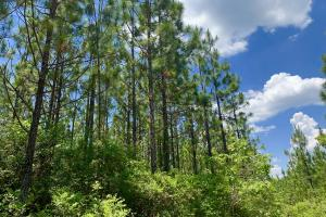 Longleaf Hunting Retreat in Escambia, AL (13 of 17)