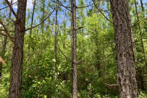 Longleaf Hunting Retreat in Escambia, AL (14 of 17)